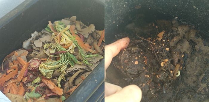 photo du compost avant/après